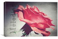 Peachy Rose., Canvas Print