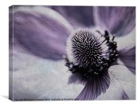 Anemon Up Close, Canvas Print