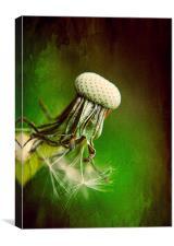 Dandelion Textured, Canvas Print
