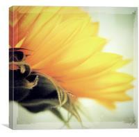 Sunflower Delight, Canvas Print