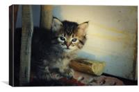 Kitty, Canvas Print