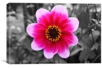 Flower Black with red/pink colour, Canvas Print