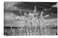 Beach grass, Morecambe, Canvas Print