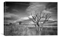 Tree, Canvas Print