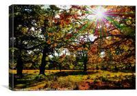Autumn woodland, Canvas Print