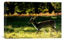 Young deer, Canvas Print