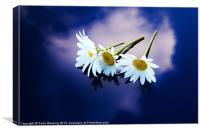 Daisies on blue, Canvas Print