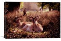 Sika Deer, Canvas Print
