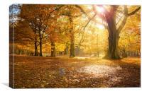 Autumn Glory II, Canvas Print