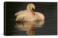 Swan at Eastleigh Country Park II
