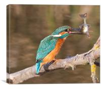 Kingfisher / Perch, Canvas Print