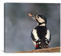 G.S.Woodpecker.