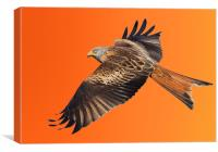 Red Kite, Canvas Print