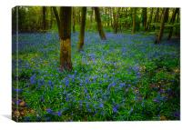 Bluebell Wood Wanstead