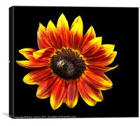 Sunflower with bee, Canvas Print
