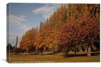 Autumn Colours, Chinbrooke Meadows, Canvas Print