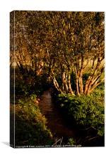 River Quaggy, Canvas Print