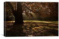 Sunbeams and Oak Tree, Canvas Print