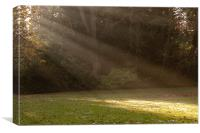 Sunlight Spotlights, Canvas Print