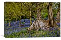 Bluebells and Tree Stump, Canvas Print