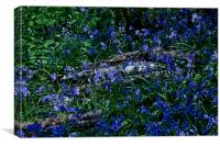 Bluebells and Silver Birch logs, Canvas Print