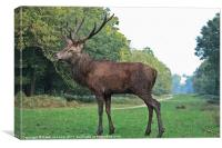 Red Deer Stag Painting, Canvas Print