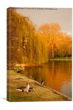 Geese at St. James's Park, Canvas Print