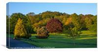 Lesnes Abbey Woods, Canvas Print