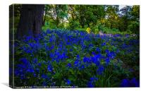 Ashenbank Bluebell Wood, Canvas Print