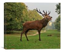 Stately Stag in Richmond Park, London, UK, Canvas Print