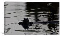 Frog, Canvas Print