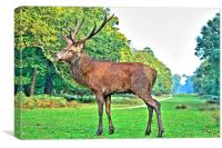 Red Deer, Richmond Park, London, UK, Canvas Print