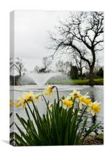 Daffodils and Fountain, Eltham, South London, Canvas Print