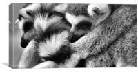 Fur Pile, Canvas Print