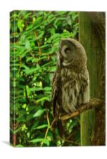 The Owl, Canvas Print
