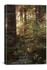 Sunrise through the wood's, Canvas Print