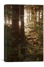Sunrise through the wood's 2, Canvas Print