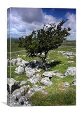 Lone tree in Malham
