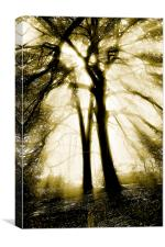 Sunlight through trees, Canvas Print