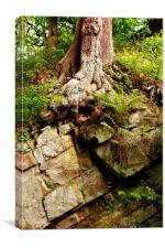 Tree and Rock, Canvas Print