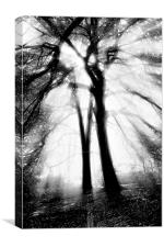 Sunlight through trees (mono), Canvas Print