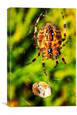 Spider and prey, Canvas Print