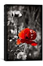 red poppy (papaver rhoeas) and hoverfly., Canvas Print