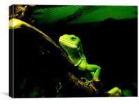 chameleon, Canvas Print