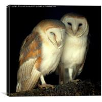 Barn Owl Love, Canvas Print