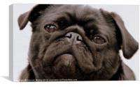 Black Pug Dog, Canvas Print