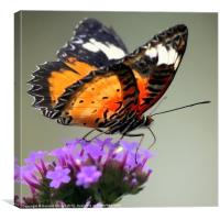 Orange Butterfly, Canvas Print