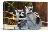 Ring-Tailed Lemurs, Canvas Print