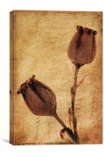 Pods, Canvas Print