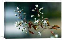 Spring Awakening, Canvas Print